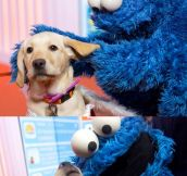 Dog Meets Cookie Monster