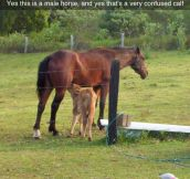 Awkward Moment At The Farm