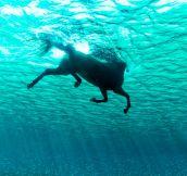 The Very Rare Seahorse