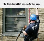 Tiger Found In Public Housing In NY