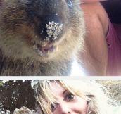 Quokka Selfies