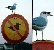 I Wouldn't Mess With That Bird