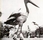 20 Hilariously Bizarre Vintage Animal Photos…