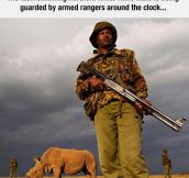 Fighting Heavily Armed Poachers Is Not An Easy Task