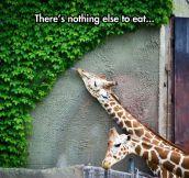 I Feel Sorry For That Giraffe