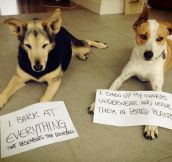 The Best of Dog Shaming – Part 28 (14 Pics)