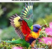Colorful And Beautiful Creature