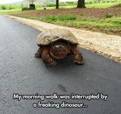 Interrupted Morning Walk