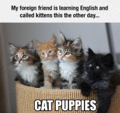 New Word For Kittens
