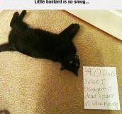 Cat's Confession