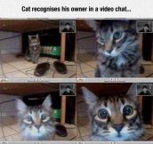 Video Chat With The Cat