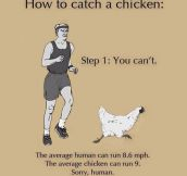 Here's How To Catch A Chicken
