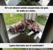 Indoor Cat Loves Catgrass