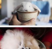 Cups Of Cute