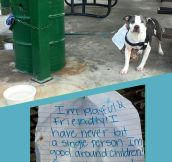 The Dog Was Then Taken To A Shelter