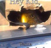 Psst, Hey Kid