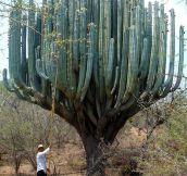 Cactus In Oaxaca