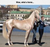 The Most Glamorous Horse I've Ever Seen