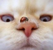 Lovely Pic Of A Ladybug In A Cat Nose