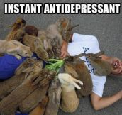 The Best Instant Antidepressant