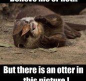 Skilled Ninja Otter