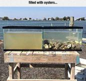 Natural Water Filter