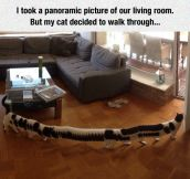 Panoramic Picture Of A Cat