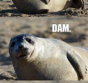 Comedian Seal