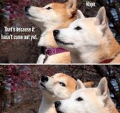 Shibes Talking About Movies