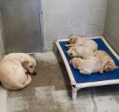 Parents Know About Uncomfortable Places To Sleep