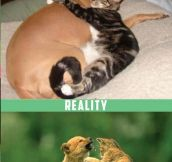 Expectations vs Reality With Cats…