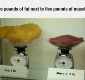 Fat Vs. Muscle Tissue