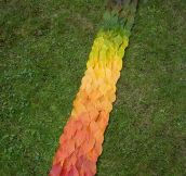 Nature's Color Patterns