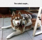 Husky Love Is Best Love