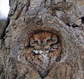 That Hole Was Made Specifically For This Owl