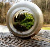 A Landscape In A Bottle