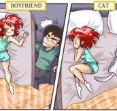 Boyfriend Vs. Cat