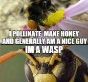 Save The Honey Bee