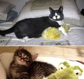 Photos Of Cats And Dogs Growing Up With Their Toys