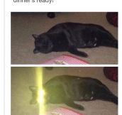 Cat Of Ultron