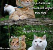 Sir Mittens