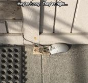 That Mouse Had Balls