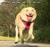 Not All Dogs Look Majestic When They Run