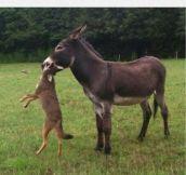 That'll Do Donkey, That'll Do