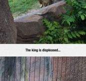 Disgust Of The King