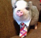 Corporate Pig