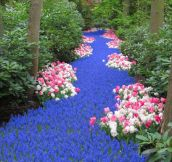 A River Of Flowers