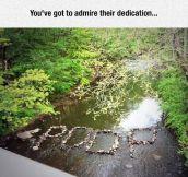 Pure Dedication