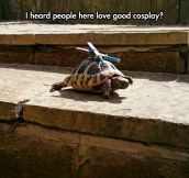 The Most Realistic Leonardo Cosplay