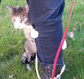 Indoor Cats Going Outside For The First Time… (16 Pics)